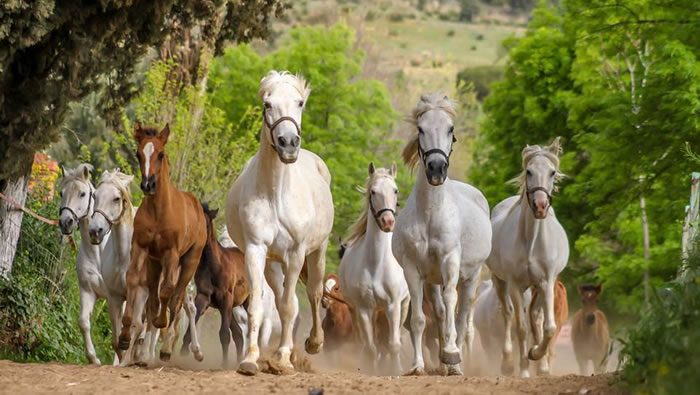 بالصور صور حصان , صور خيل حلوه 1178 11