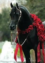 بالصور صور حصان , صور خيل حلوه 1178 5