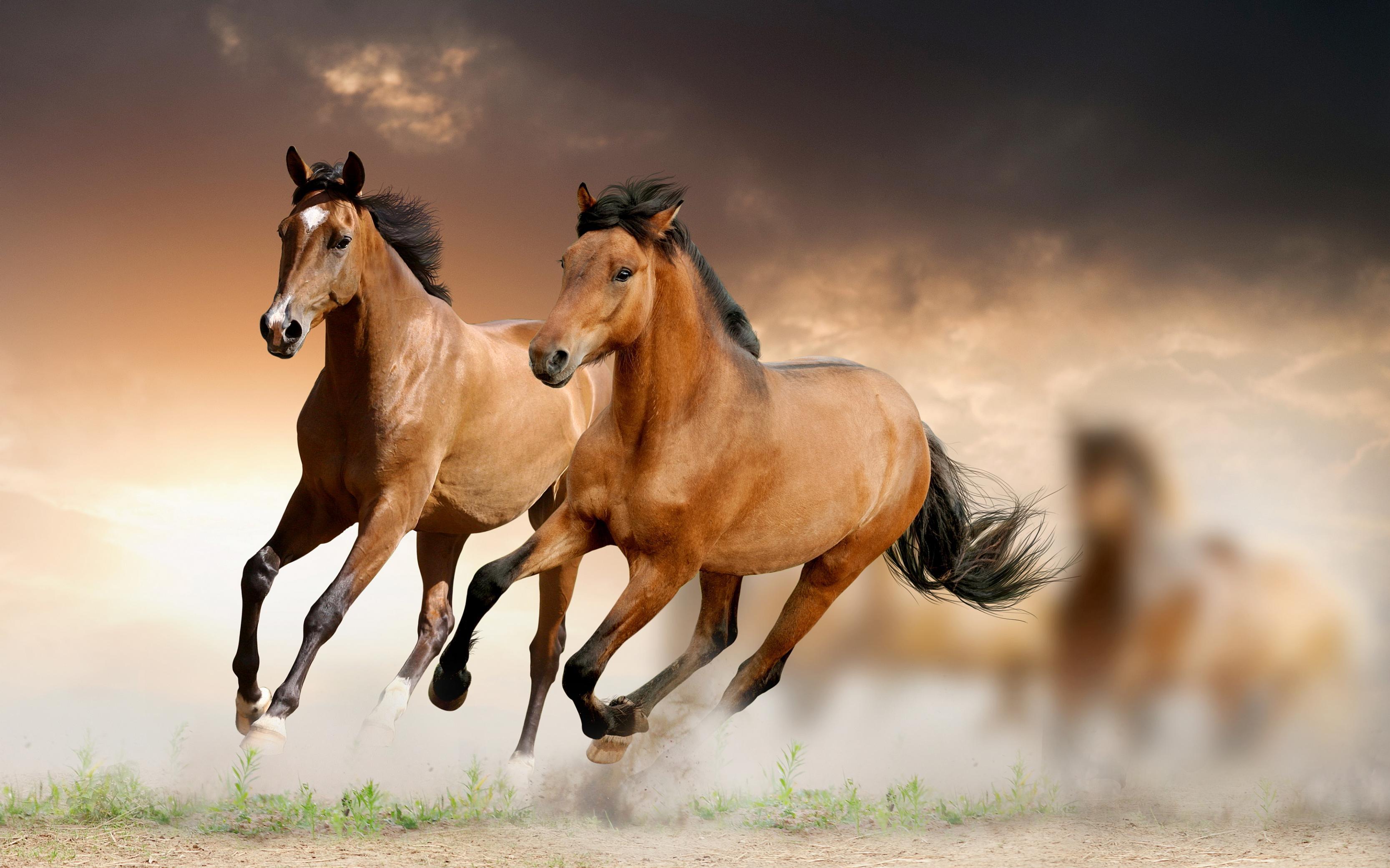 بالصور صور حصان , صور خيل حلوه 1178 6
