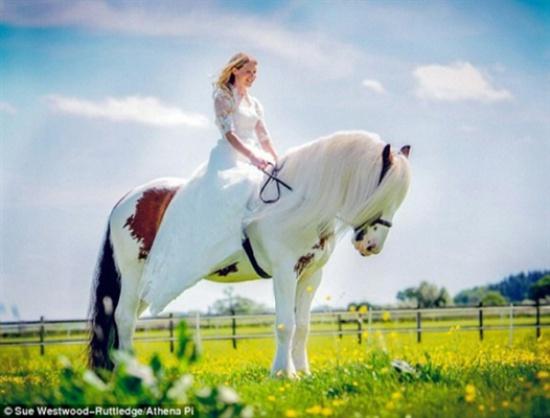 بالصور صور حصان , صور خيل حلوه 1178 8
