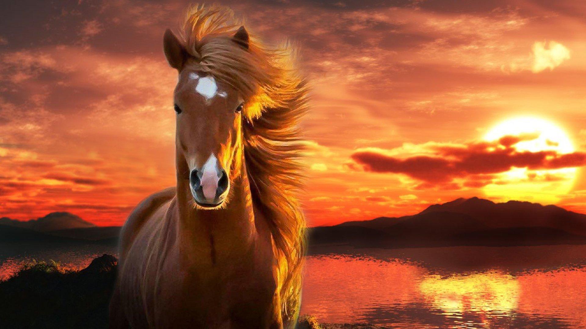 بالصور صور خيول , اجمل واروع خيول العالم 1255 11