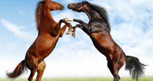 صور صور خيول , اجمل واروع خيول العالم