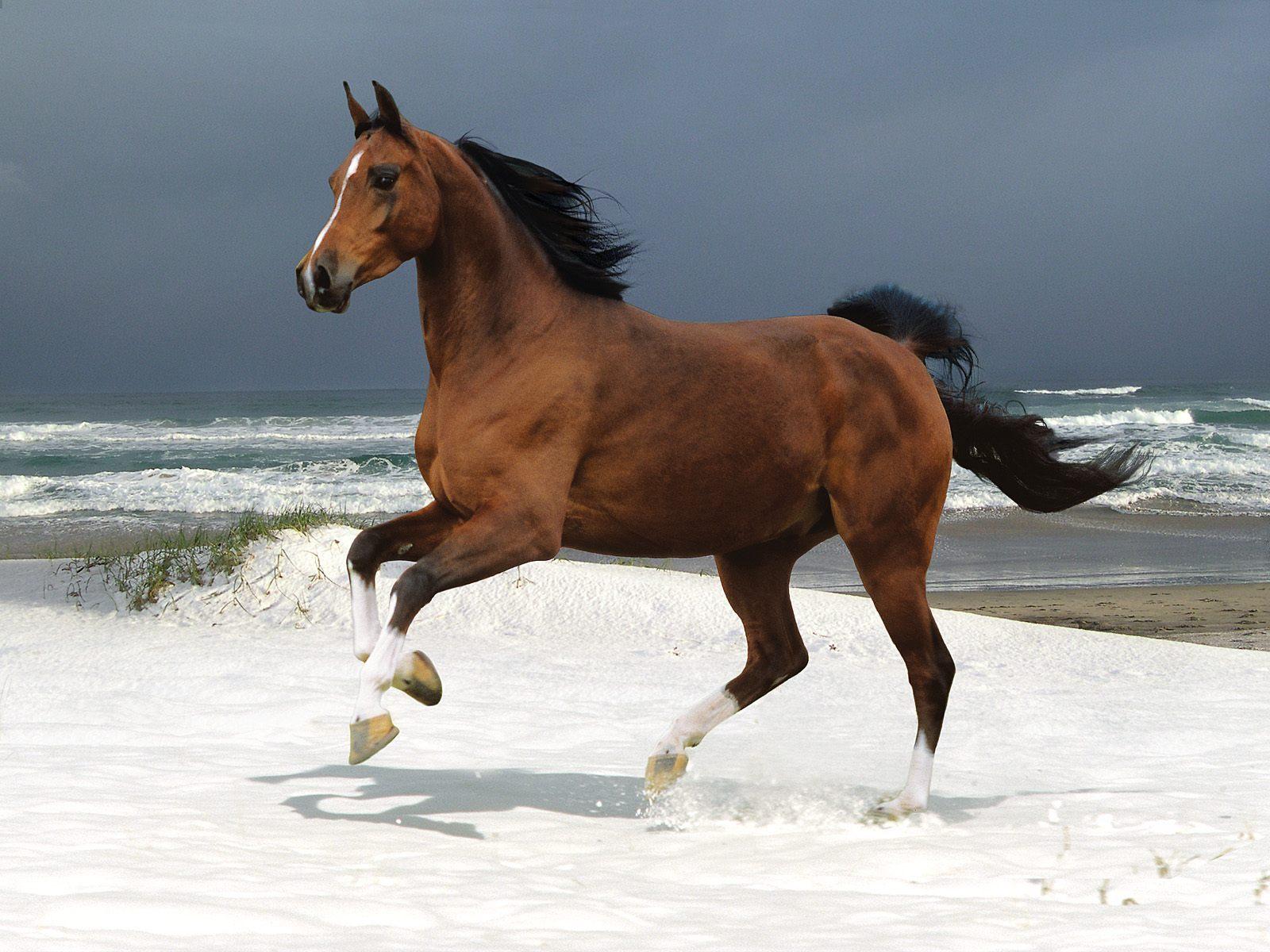 بالصور صور خيول , اجمل واروع خيول العالم 1255 4