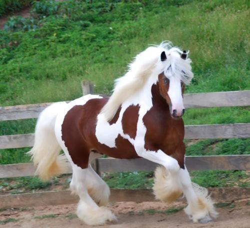 بالصور صور خيول , اجمل واروع خيول العالم 1255 5