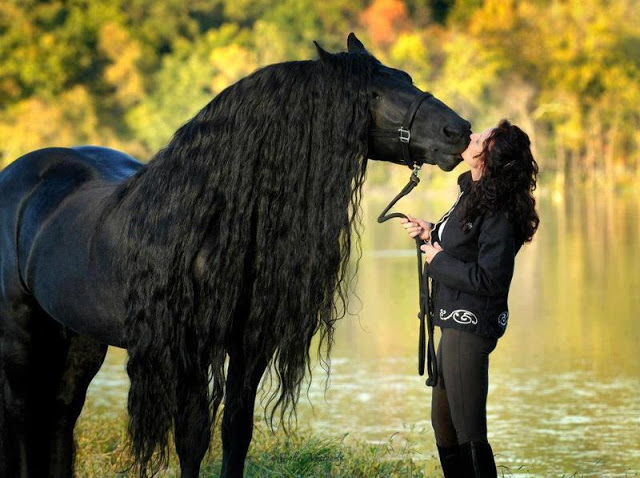 بالصور صور خيول , اجمل واروع خيول العالم 1255 6