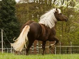 بالصور صور خيول , اجمل واروع خيول العالم 1255 8