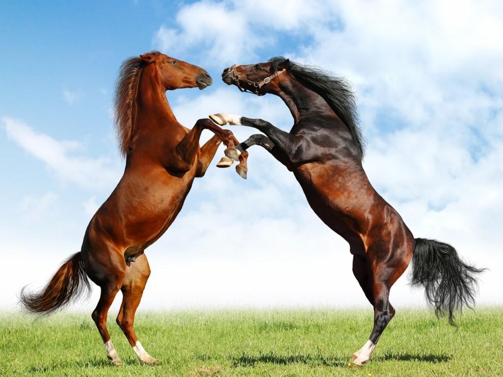 صوره صور خيول , اجمل واروع خيول العالم