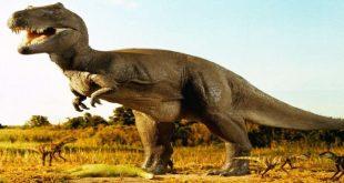 بالصور معلومات عن الديناصورات , ولماذا انقرضت مذكور في القرءان 1744 3 310x165