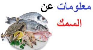 صوره معلومات عن الاسماك , وانواعها واشكالها المختلفة