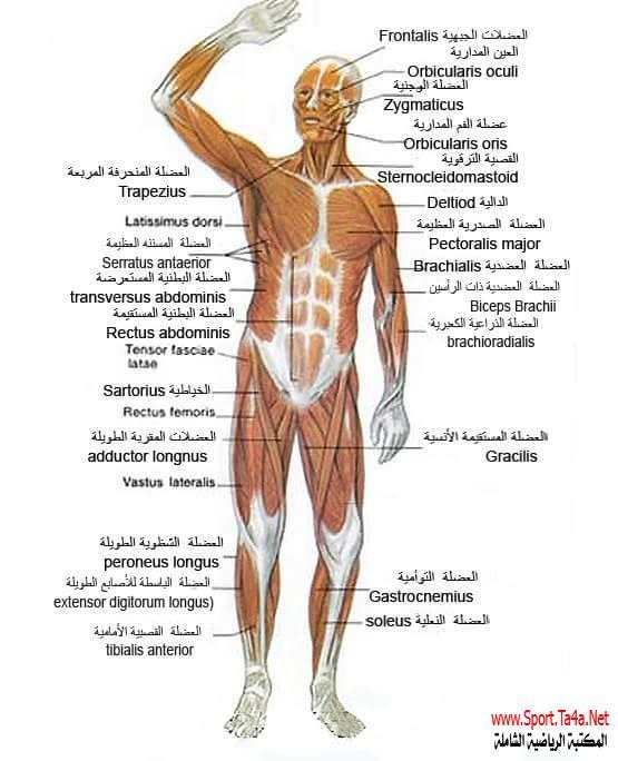 صوره جسم حلو , كيفية الوصول الي جسم حلو وبه عضلات