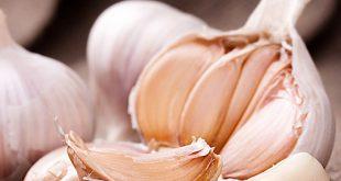 فوائد اكل الثوم , اهمية اكل الثوم يوميا