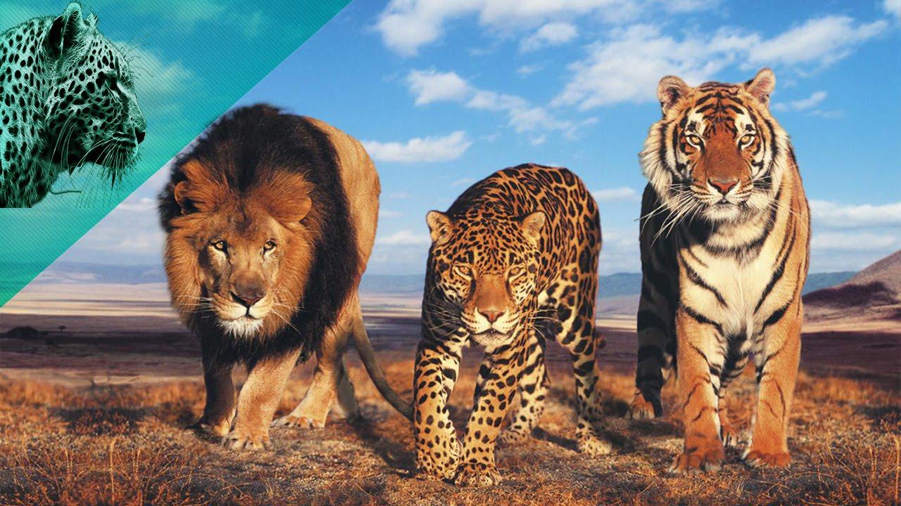 صورة اسرع حيوان في العالم , ماهو اسرع حيوان في العالم 3024