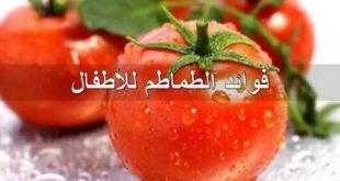 فوائد الطماطم , فوائد الطماطم الصحية المذهلة