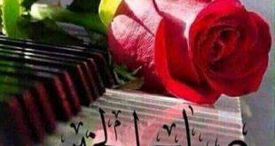 صوره صور صباح الورد , الورد وجمالة من احلى شىء