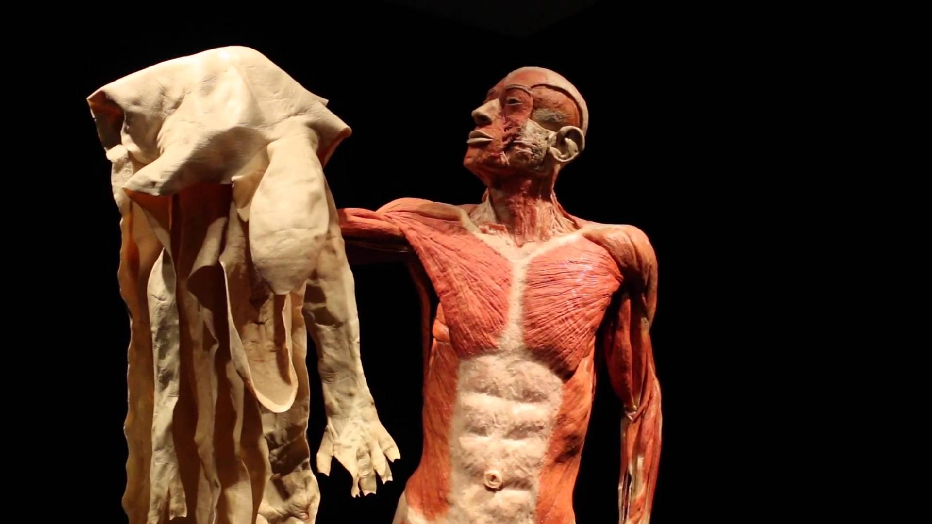 صورة معلومات علمية , اغرب معلومات علمية عن جسم الانسان