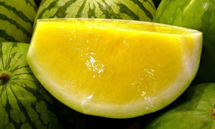صوره بطيخ اصفر , اجمل صور البطيخ الاصفر