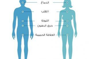 صورة جسم الرجل و المراه , الفرق بين جسم الرجل و جسم المراه