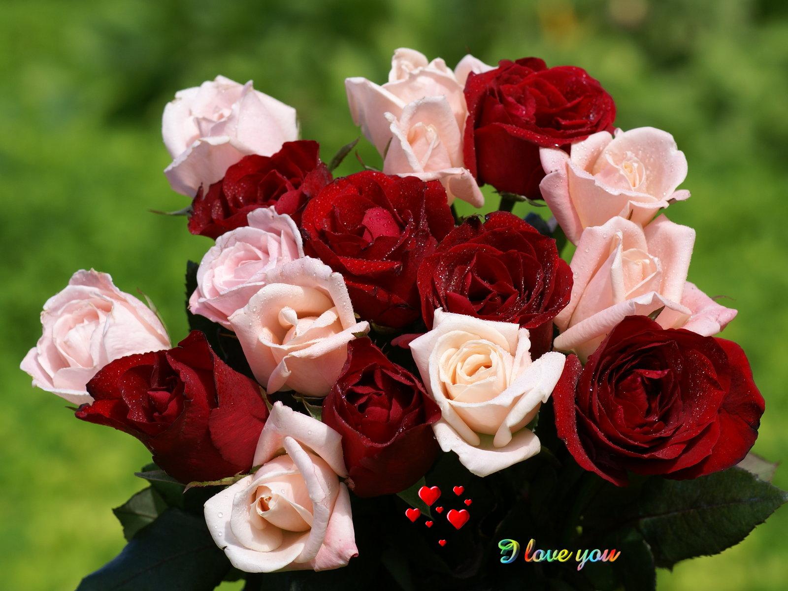 بالصور صور ورد طبيعي , اجمل الورود الطبيعيه باشكالها المختلفه 1054 4