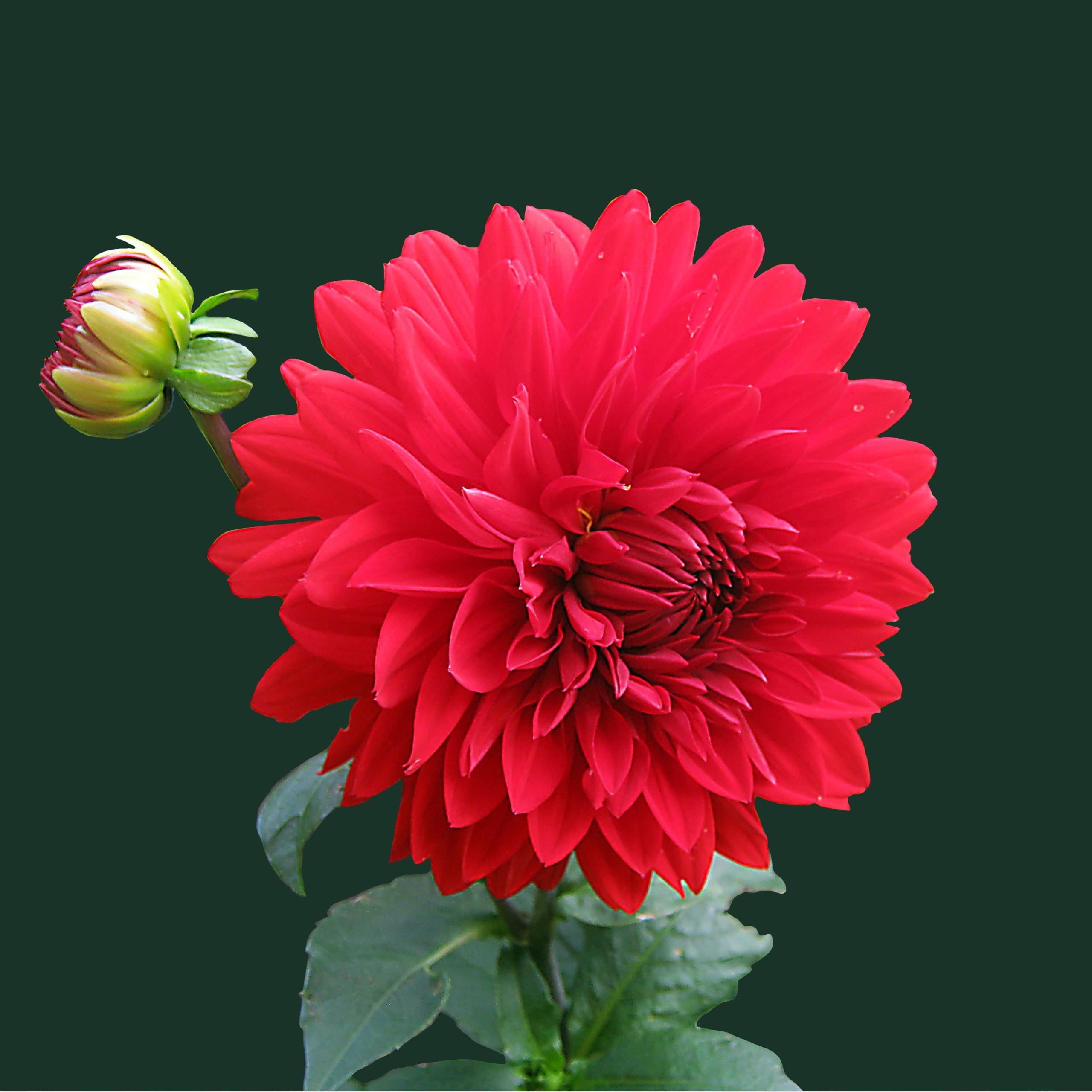 بالصور صور ورد طبيعي , اجمل الورود الطبيعيه باشكالها المختلفه 1054 9