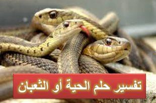صوره الافاعي في المنام , تفسيرات عديده لرؤيه الافعي في المنام