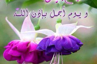 بالصور ورود مكتوب عليها عبارات جميله , اجمل اشكال الزهور والعبارات والكلمات 1925 13 310x205