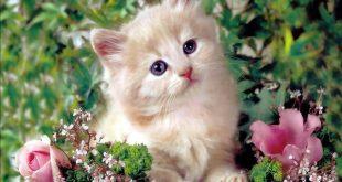 صوره صور قطط جميلة , ورائعه وكيوت وجميلة جدا
