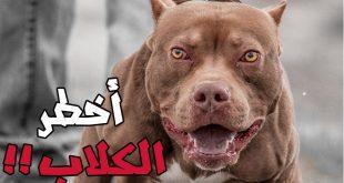 صوره اشرس انواع الكلاب , واخطرها في مصر