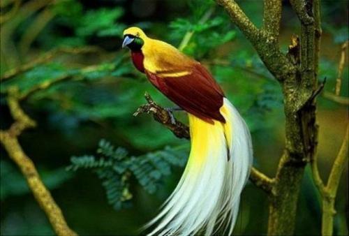 صوره اجمل الطيور في العالم , احلي واروع اشكال الطيور المميزة في العالم