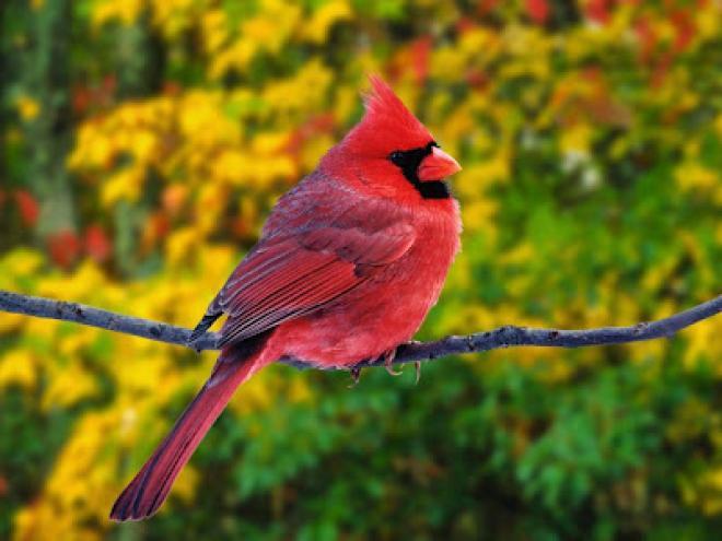 بالصور اجمل الطيور في العالم , احلي واروع اشكال الطيور المميزة في العالم 2162 11