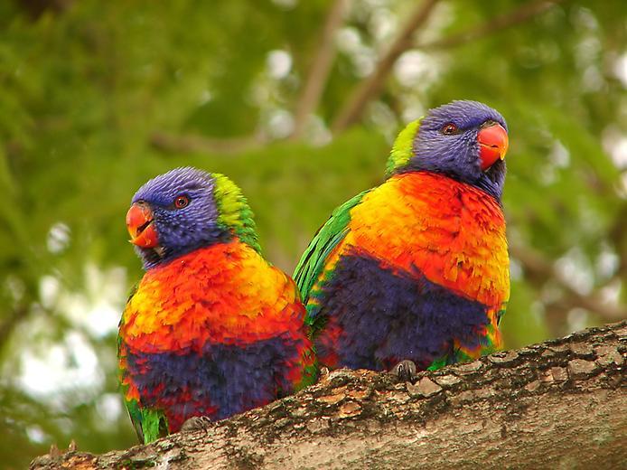بالصور اجمل الطيور في العالم , احلي واروع اشكال الطيور المميزة في العالم 2162 12