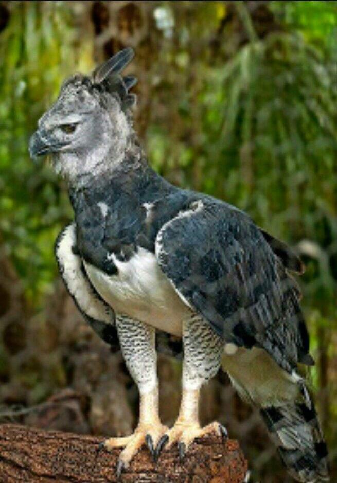 بالصور اجمل الطيور في العالم , احلي واروع اشكال الطيور المميزة في العالم 2162 2