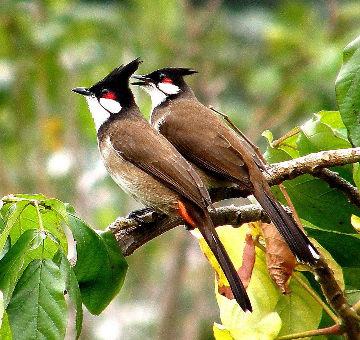بالصور اجمل الطيور في العالم , احلي واروع اشكال الطيور المميزة في العالم 2162 3