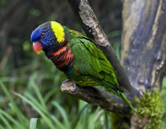 بالصور اجمل الطيور في العالم , احلي واروع اشكال الطيور المميزة في العالم 2162 4