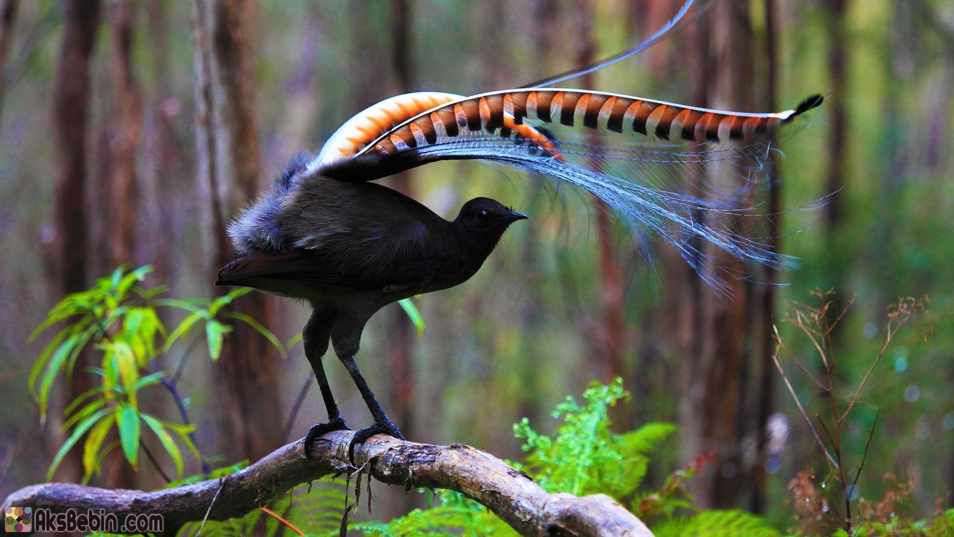 بالصور اجمل الطيور في العالم , احلي واروع اشكال الطيور المميزة في العالم 2162 6