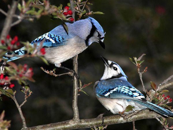 بالصور اجمل الطيور في العالم , احلي واروع اشكال الطيور المميزة في العالم 2162 8