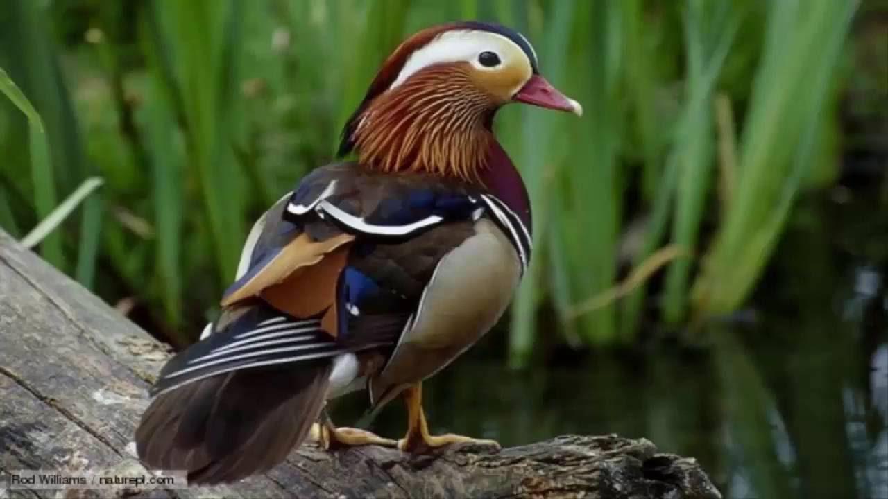 بالصور اجمل الطيور في العالم , احلي واروع اشكال الطيور المميزة في العالم 2162