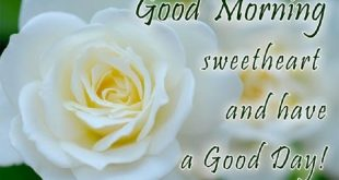 صور رسالة صباحية للحبيب , صور صباح الخير حبيبى انجليزى
