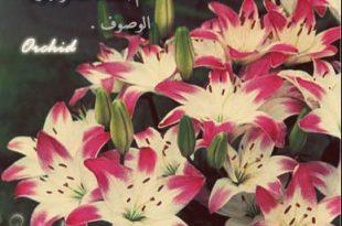صورة صور ورود حلوه , انواع الورود واسمائها