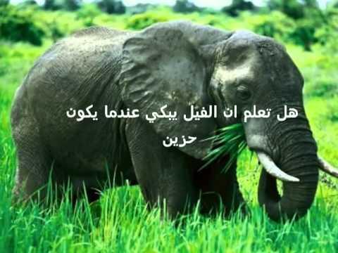 صوره هل تعلم عن الحيوانات , معلومات مهمه عن الحيوانات