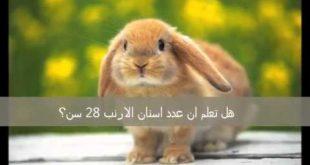 بالصور هل تعلم عن الحيوانات , معلومات مهمه عن الحيوانات 4120 3 310x165