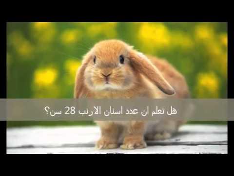 بالصور هل تعلم عن الحيوانات , معلومات مهمه عن الحيوانات 4120