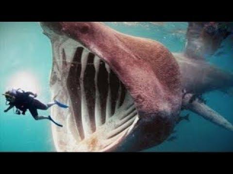 بالصور صور سمك القرش , من اخطر الحيوانات البحريةخطورة سمكة القرش 4176 1