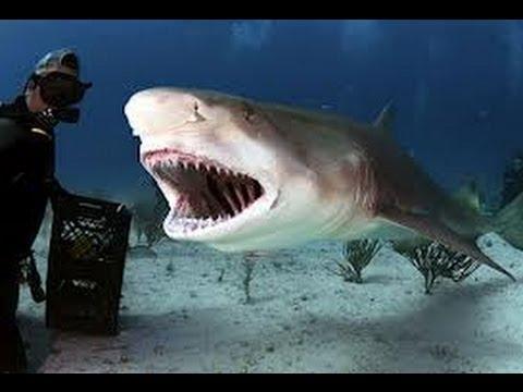 بالصور صور سمك القرش , من اخطر الحيوانات البحريةخطورة سمكة القرش 4176 10