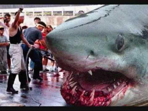 بالصور صور سمك القرش , من اخطر الحيوانات البحريةخطورة سمكة القرش 4176 11
