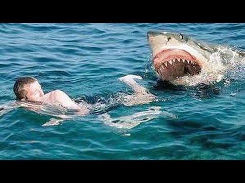 بالصور صور سمك القرش , من اخطر الحيوانات البحريةخطورة سمكة القرش 4176 12