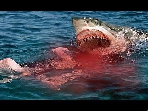 بالصور صور سمك القرش , من اخطر الحيوانات البحريةخطورة سمكة القرش 4176 4