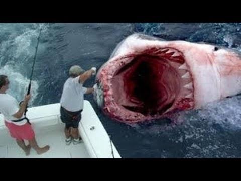 بالصور صور سمك القرش , من اخطر الحيوانات البحريةخطورة سمكة القرش 4176 5