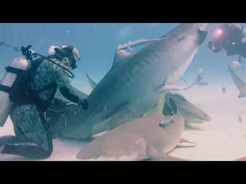 بالصور صور سمك القرش , من اخطر الحيوانات البحريةخطورة سمكة القرش 4176 6