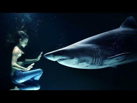 بالصور صور سمك القرش , من اخطر الحيوانات البحريةخطورة سمكة القرش 4176 7