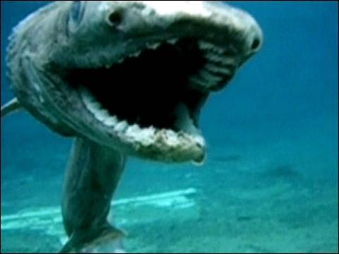 بالصور صور سمك القرش , من اخطر الحيوانات البحريةخطورة سمكة القرش 4176 8